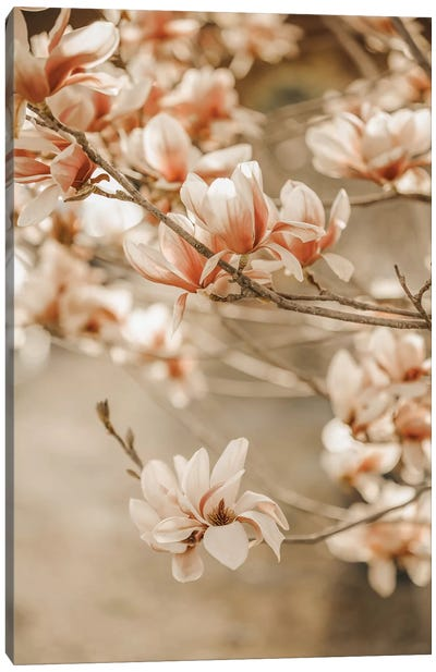 Magnolia Peach II Canvas Art Print