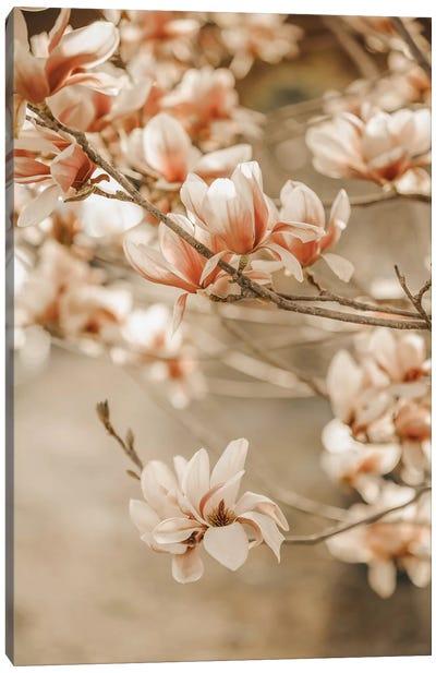 Magnolia Peach II Canvas Art Print
