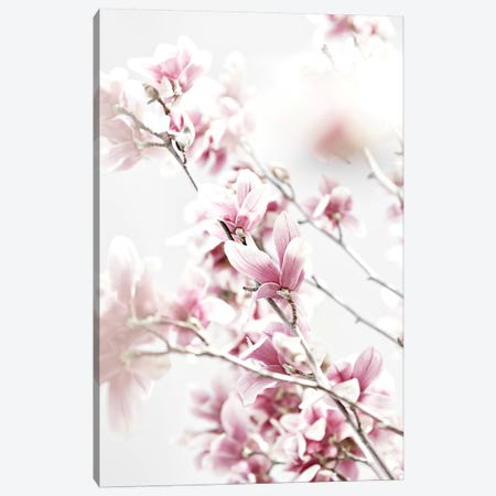 Magnolia Pink White Canvas Print #GEL214} by Monika Strigel Canvas Print