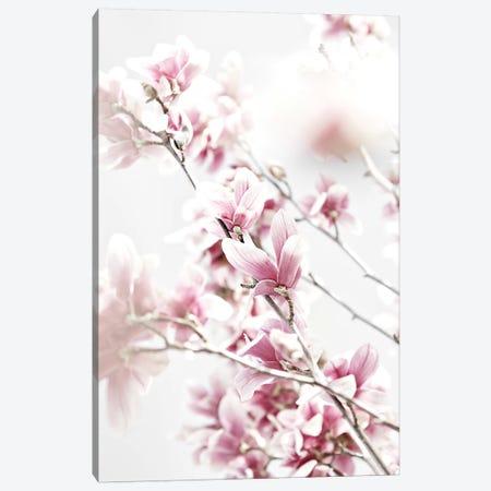 Magnolia Pink White Canvas Print #GEL214} by Monika Strigel Canvas Print