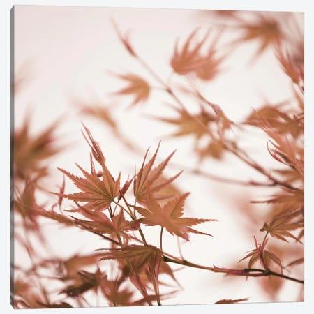 Maple Leaves I Square Canvas Print #GEL215} by Monika Strigel Canvas Print