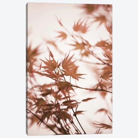 Maple Leaves I Canvas Print #GEL216} by Monika Strigel Canvas Print