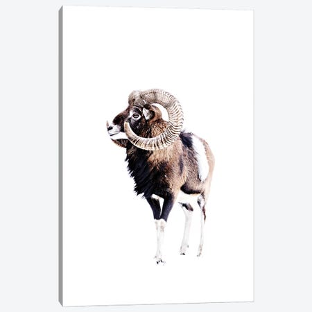 Mouflon Ram White 3-Piece Canvas #GEL217} by Monika Strigel Canvas Print