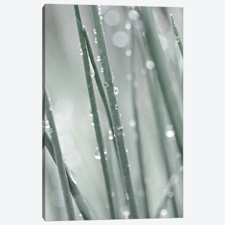Pale Grass 3-Piece Canvas #GEL224} by Monika Strigel Canvas Artwork
