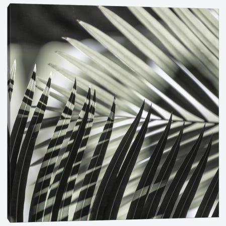 Palmleaves Shades Green Square Canvas Print #GEL225} by Monika Strigel Canvas Artwork