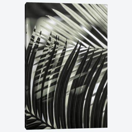 Palmleaves Shades Green Canvas Print #GEL226} by Monika Strigel Canvas Art