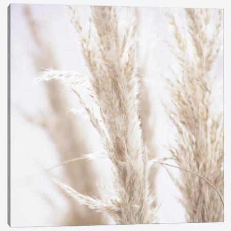 Pampas Reed I Square Canvas Print #GEL227} by Monika Strigel Canvas Art