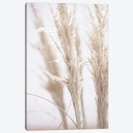 Pampas Reed I 3-Piece Canvas #GEL228} by Monika Strigel Art Print