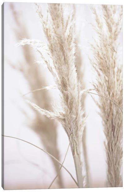 Pampas Reed I Canvas Art Print