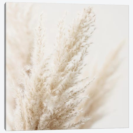 Pampas Reed III Square 3-Piece Canvas #GEL231} by Monika Strigel Canvas Art