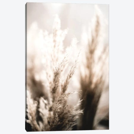 Pampas Reed V 3-Piece Canvas #GEL233} by Monika Strigel Canvas Wall Art