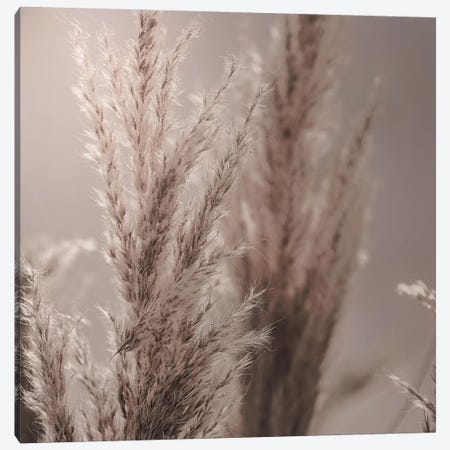Pampas Reed VI Square 3-Piece Canvas #GEL234} by Monika Strigel Canvas Art Print