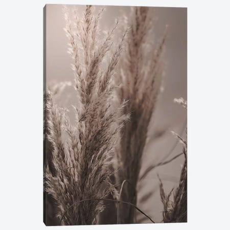 Pampas Reed VI 3-Piece Canvas #GEL235} by Monika Strigel Canvas Print