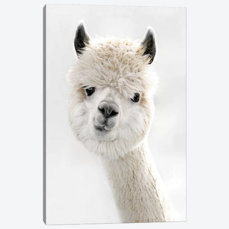Peeky Alpaca Canvas Print #GEL240} by Monika Strigel Canvas Print