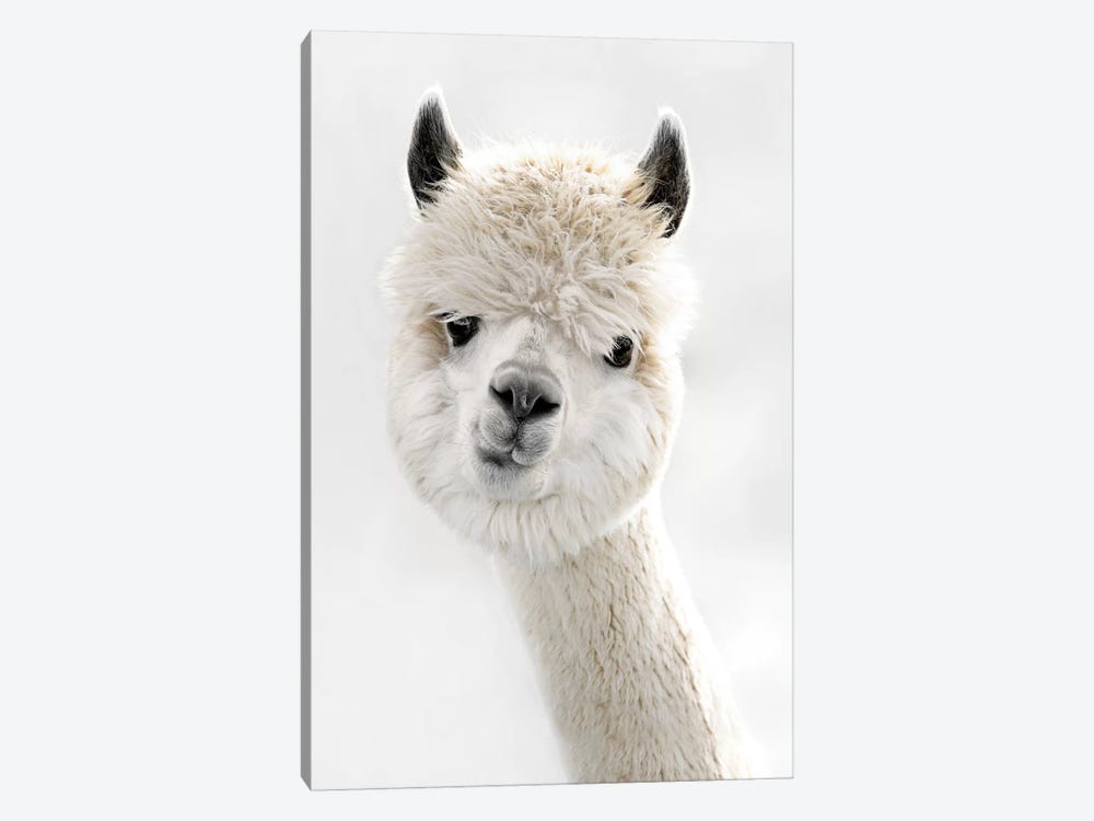 Peeky Alpaca by Monika Strigel 1-piece Canvas Artwork