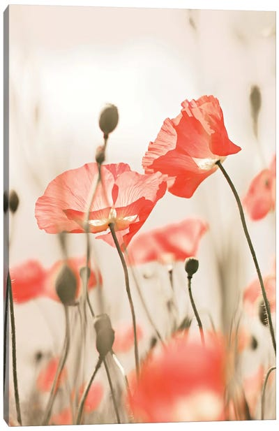 Poppy Flowers Peach Canvas Art Print