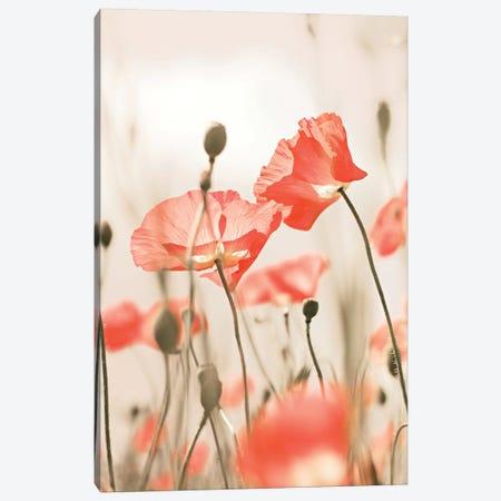 Poppy Flowers Peach Canvas Print #GEL242} by Monika Strigel Canvas Print