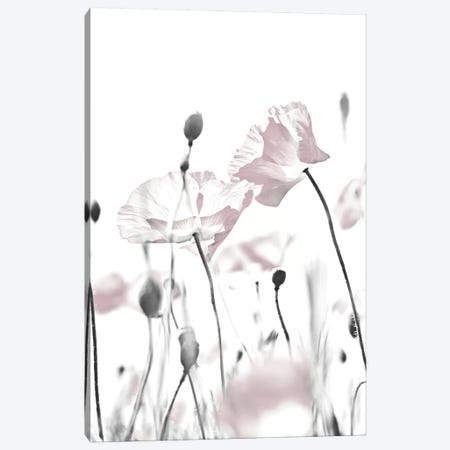 Poppy White I Canvas Print #GEL243} by Monika Strigel Canvas Print