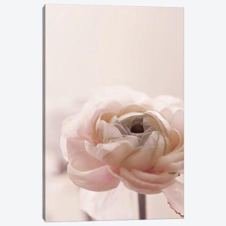 Rose Flowers II Canvas Print #GEL248} by Monika Strigel Canvas Art Print