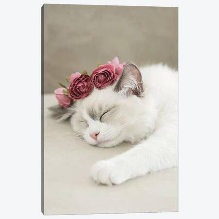 Sleepy Kitty Canvas Print #GEL272} by Monika Strigel Canvas Art