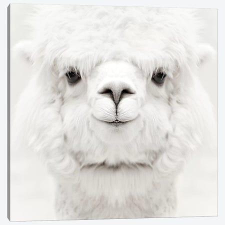 Smiling Alpaca Square Canvas Print #GEL273} by Monika Strigel Canvas Artwork