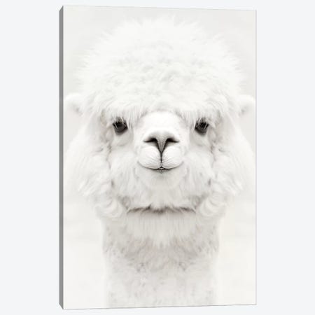 Smiling Alpaca Canvas Print #GEL274} by Monika Strigel Art Print