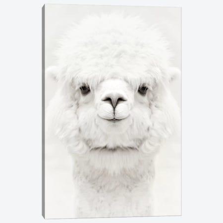 Smiling Alpaca Canvas Print #GEL274} by Monika Strigel Art Print