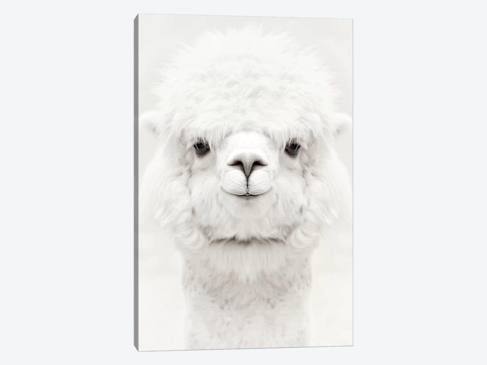 Smiling Alpaca by Monika Strigel 1-piece Canvas Art Print