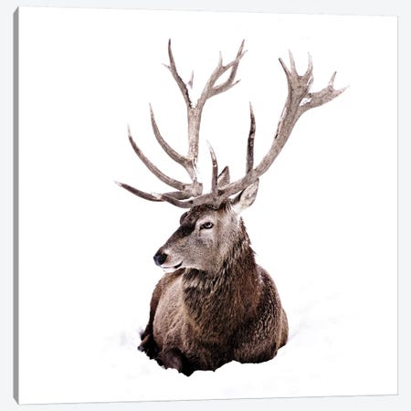 Stag In Snow II Square Canvas Print #GEL279} by Monika Strigel Canvas Wall Art