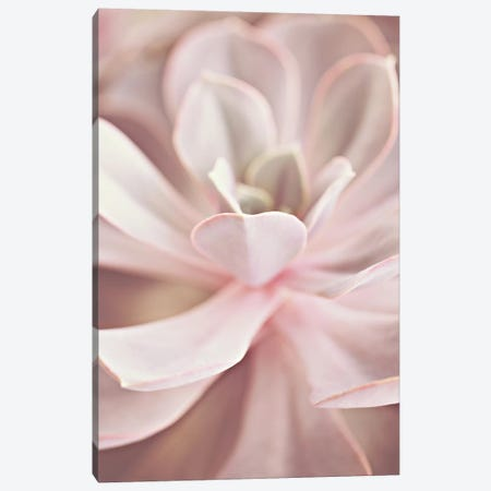 Succulent Rose Pastel Canvas Print #GEL281} by Monika Strigel Art Print