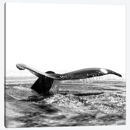 Whale Song I Iceland Black And White Square Canvas Print #GEL304} by Monika Strigel Canvas Print