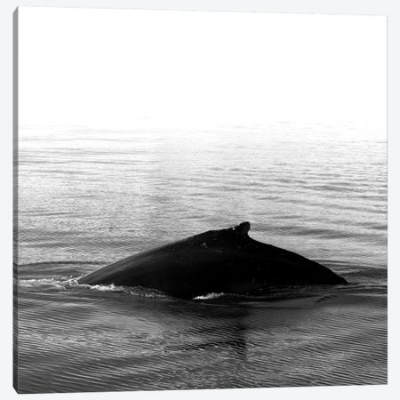 Whale Song III Black Iceland Square Canvas Print #GEL306} by Monika Strigel Canvas Print
