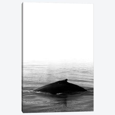 Whale Song III Black Iceland 3-Piece Canvas #GEL307} by Monika Strigel Canvas Art Print