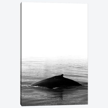 Whale Song III Black Iceland Canvas Print #GEL307} by Monika Strigel Canvas Art Print