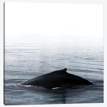 Whale Song III Blue Iceland Square Canvas Print #GEL308} by Monika Strigel Canvas Wall Art