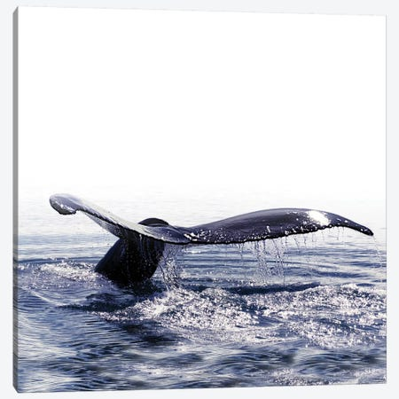 Whale Song Iceland I Square Canvas Print #GEL310} by Monika Strigel Canvas Art Print