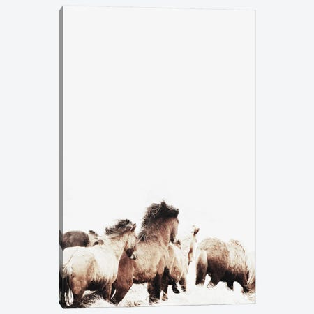 Wild And Free Horses Of Iceland II 3-Piece Canvas #GEL313} by Monika Strigel Canvas Art Print