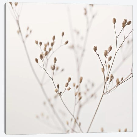 Wildflower Natural Beige I Square Canvas Print #GEL315} by Monika Strigel Canvas Wall Art