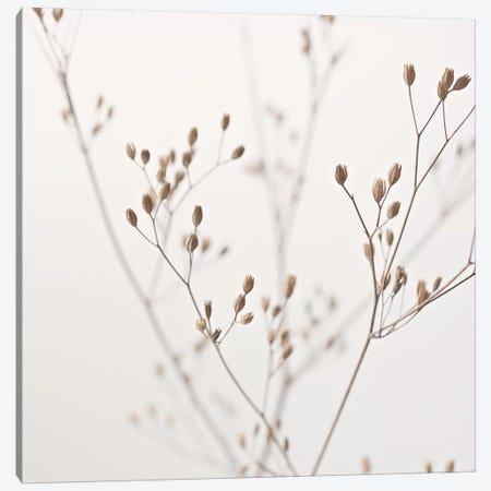 Wildflower Natural Beige I Square Canvas Print #GEL315} by Monika Strigel Canvas Wall Art