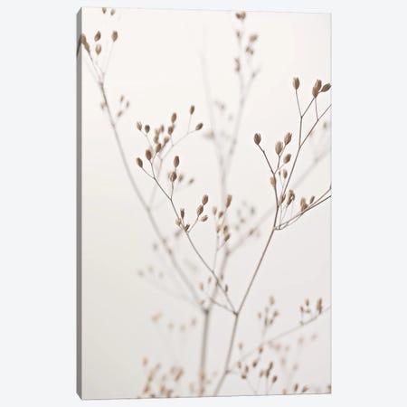 Wildflower Natural Beige I Canvas Print #GEL316} by Monika Strigel Canvas Art