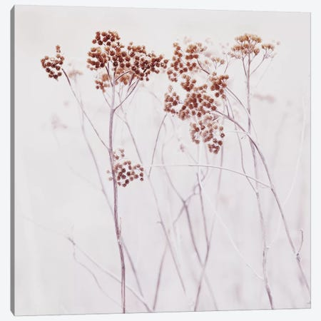 Wildflowers Iceland Square Canvas Print #GEL325} by Monika Strigel Art Print