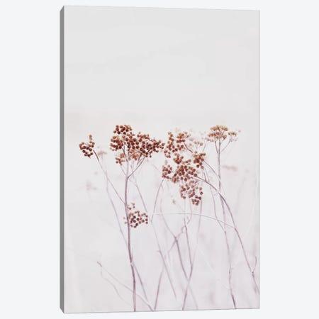 Wildflowers Iceland Canvas Print #GEL326} by Monika Strigel Art Print