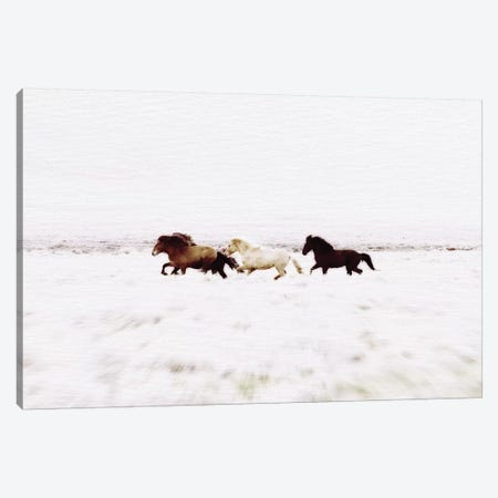 Wild Horses Iceland VIII Landscape Canvas Print #GEL329} by Monika Strigel Canvas Artwork