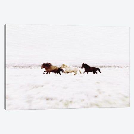 Wild Horses Iceland VIII Landscape Canvas Print #GEL329} by Monika Strigel Canvas Artwork