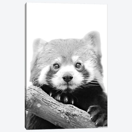 Little Red Panda Canvas Print #GEL53} by Monika Strigel Canvas Artwork