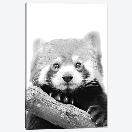 Little Red Panda Canvas Print #GEL53} by Monika Strigel Canvas Artwork