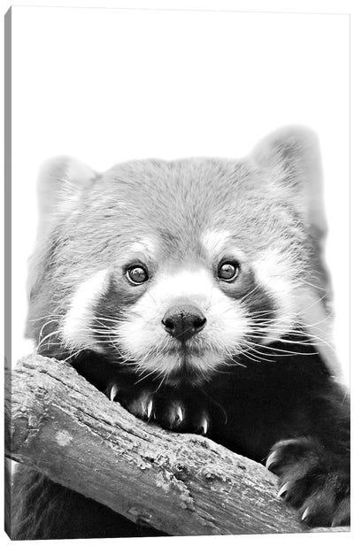 Little Red Panda Canvas Art Print