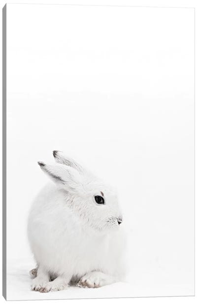Arctic Hare I Canvas Art Print