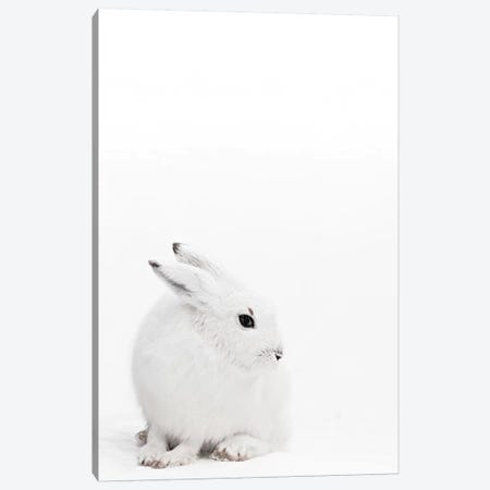 Arctic Hare I Canvas Print #GEL88} by Monika Strigel Canvas Art Print