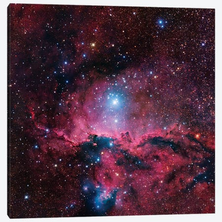 Star Forming Region In Ara (NGC 6188) II Canvas Print #GEN100} by Robert Gendler Art Print